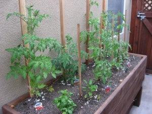 Loni Stark's Urban Vegetable Garden