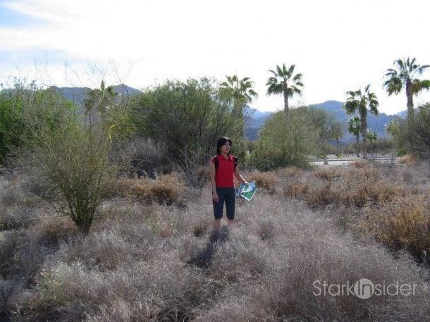 Baja desert landscape