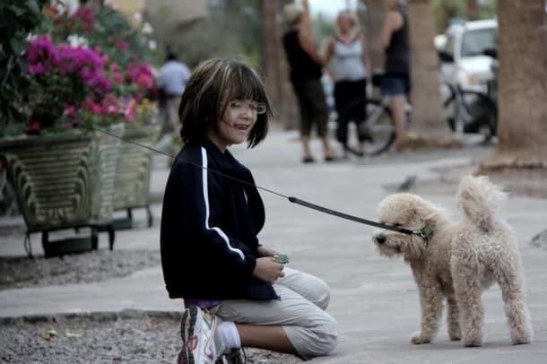 Loreto Dogs